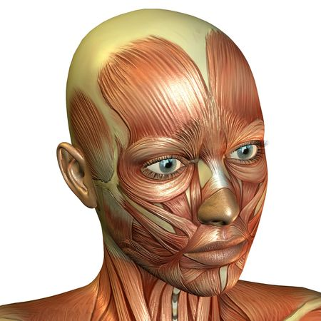 3D rendering of muscle of the female face photo