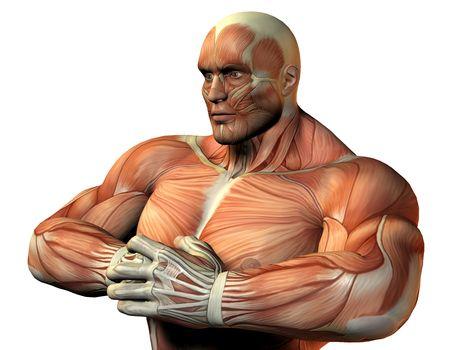 3D rendering an upper body athletes