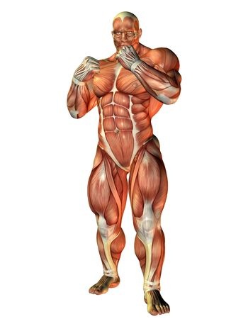 3D Rendering Muscle study of a boxer