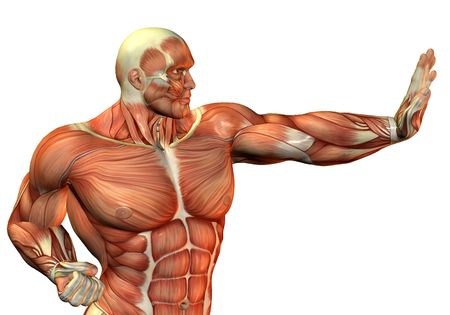 upper body: 3D Rendering Muscle Body Builder in fighting pose Stock Photo