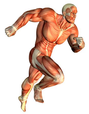 leg muscle fiber: 3D Rendering Muscle galloping Body Builder
