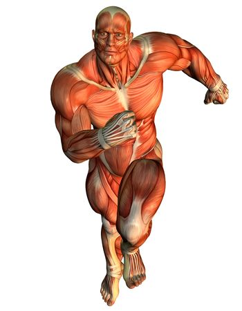 leg muscle fiber: 3D rendering muscle ongoing study of male body builders Stock Photo