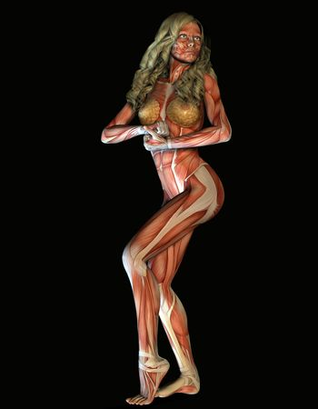 3d representation female structure of muscle in strength pose photo