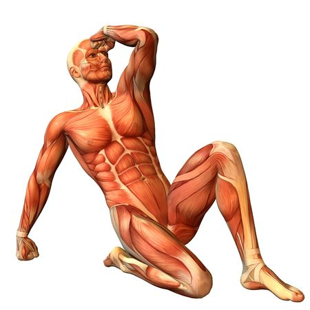 human muscle: 3D Rendering Muscle man in a sitting posture Stock Photo