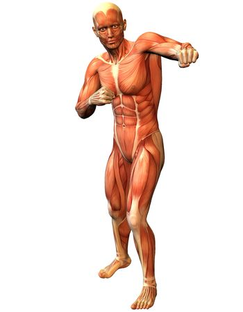 leg muscle fiber: 3D Rendering Muscle man in a standing pose fighters