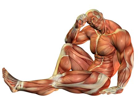 musculo: 3D de procesamiento Muscle Consejo constructores, en una pose sentado