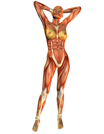 3D rendering of female muscle in the course of a standing pose