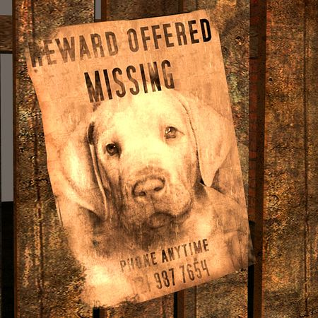 missed: 3d rendering a handbill, in which a dog is missed as illustration