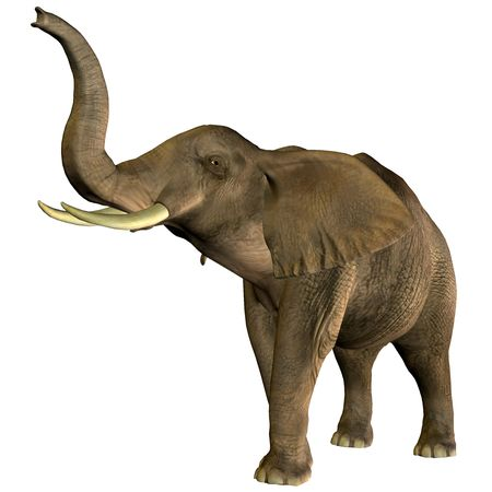 ivory: 3D rendering of an African elephant with raised trunk