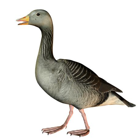 waddling: 3D rendering of a waddling goose