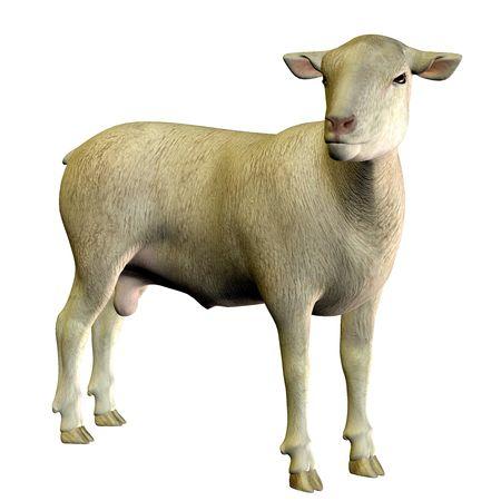 3D rendering of a standing sheep Reklamní fotografie
