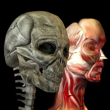 3d rendering a human a head as skulls and with muscles as illustration illustration