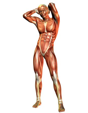 leg muscle fiber: Muscle man standing Stock Photo