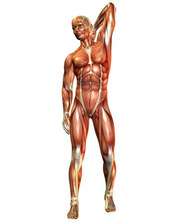 pies masculinos: Procesamiento de 3D de un hombre de músculo de la parte delantera