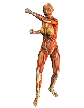 leg muscle fiber: 3D rendering of a motion study women pose in the fight