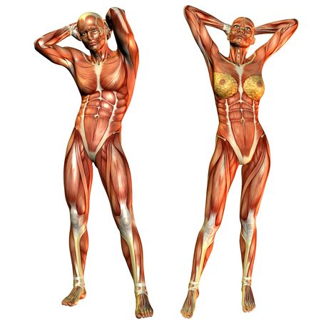 leg muscle fiber: D rendering of the female and male muscle course in a standing pose Stock Photo