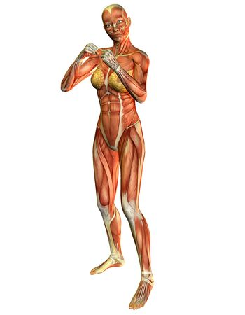 leg muscle fiber: 3D rendering of the muscle in a woman in boxing pose
