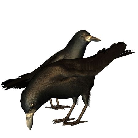 fodder: 3d rendering two crows on fodder search as illustration