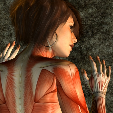 womanlike: 3d rendering of the structure of muscle of a female back as illustration