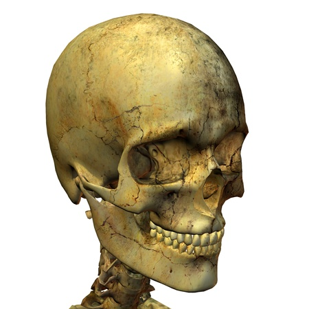 forensics: 3D rendering of a male skull from the right