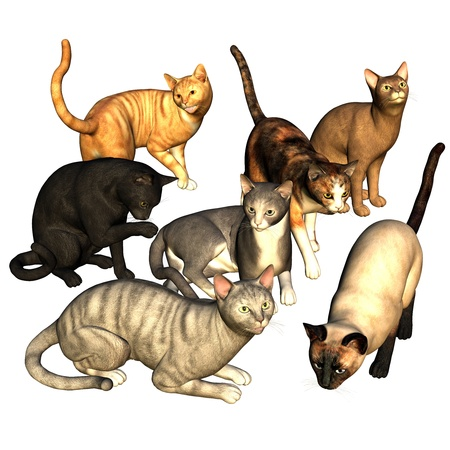 3d rendering  of  different  cats  as  illustration illustration