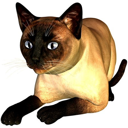siam: 3d rendering a lying Siam cat as illustration Stock Photo