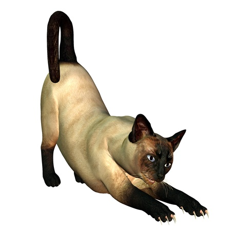 cat stretching: 3d rendering a stretching Siam cat as illustration Stock Photo