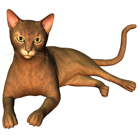 abyssinian: 3d rendering  a breed cat as illustration