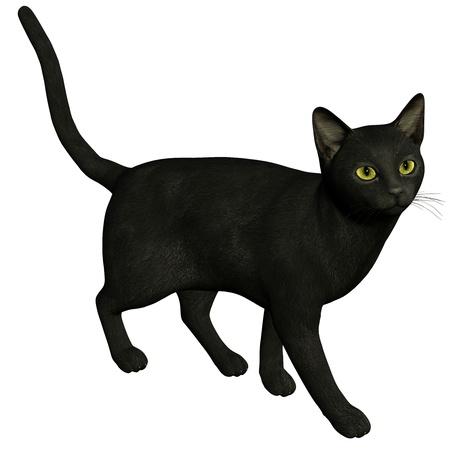 3d rendering a black cat  as  illustration Stock Illustration - 8502527