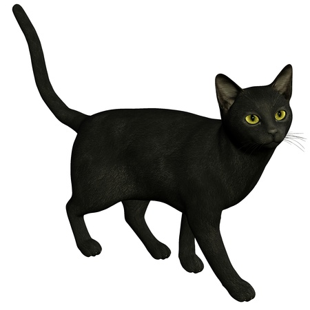 superstitions: 3d rendering a black cat  as  illustration Stock Photo