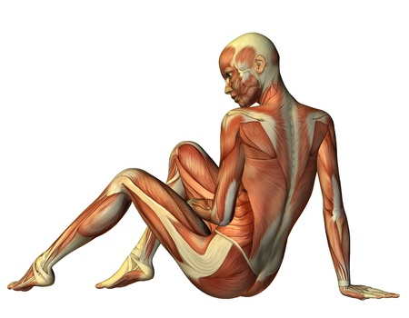 3D rendering muscle seated woman from behind