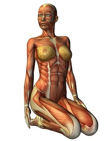 3D 렌더링 앞에서 그녀의 무릎에 Muskelln 여자