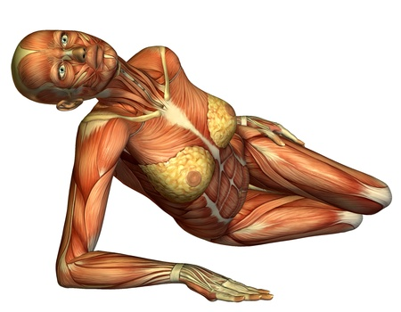 leg muscle fiber: 3D rendering muscle female body lying