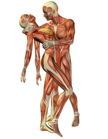 muskelaufbau: 3D Rendering Muskel Frau und Mann, stehend