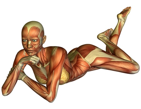 leg muscle fiber: 3D rendering muscle a reclining woman Stock Photo