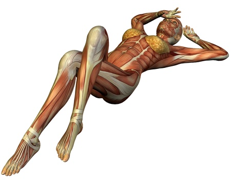 leg muscle fiber: 3D Rendering Muscle structure of a supine woman