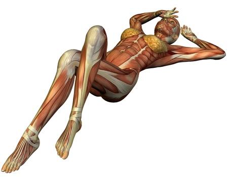 muskelaufbau: 3D Rendering Muskel-Struktur einer R�ckenlage Frau