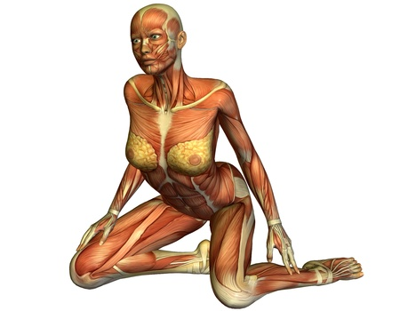 3D rendering of the muscles of a kneeling woman Stock Photo