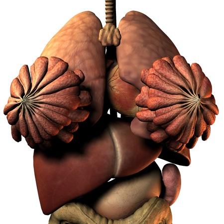 3D Rendering internal organs of the woman Stock Photo - 9167570