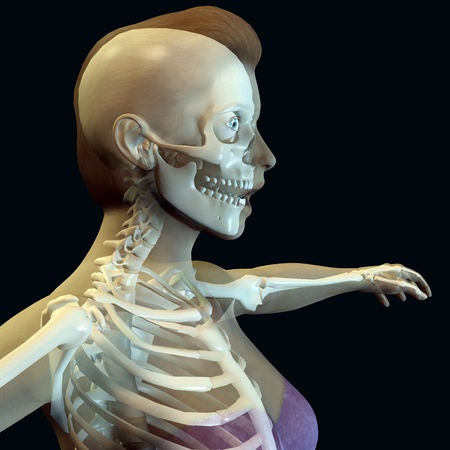 3d rendering of a woman's upper body with a skeleton illustration  Stock Illustration - 9560904