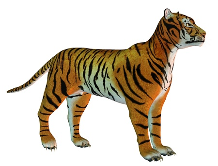 attentive: 3D Rendering attentive standing Tigers