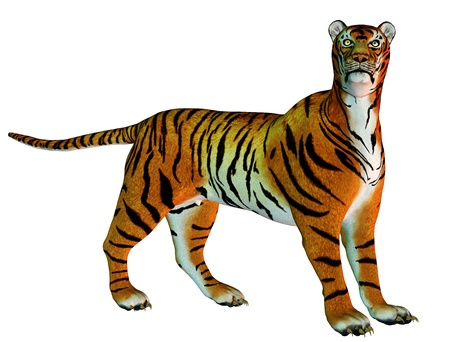 panthera: 3D rendering of big cat tiger standing Stock Photo