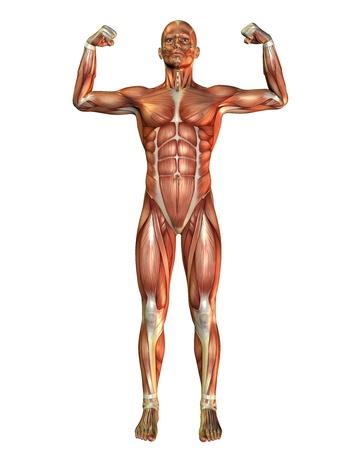 anatomia: 3D pose de hombre de procesamiento muscular en vigor