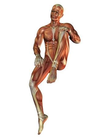 leg muscle fiber: 3D Rendering Muscle man in a sitting posture Stock Photo