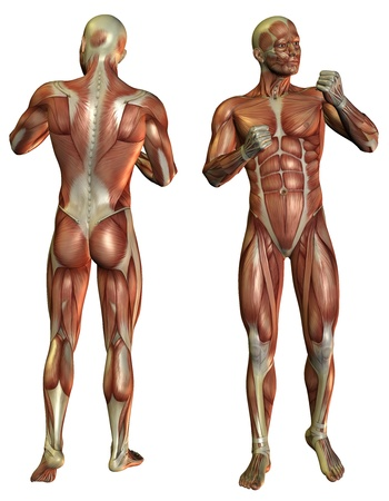 leg muscle fiber: 3D Rendering Muscle Man in the fighters pose in front and rear Stock Photo
