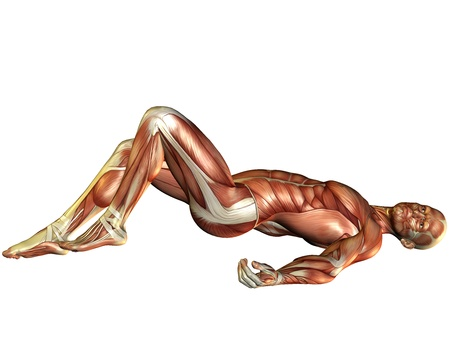 leg muscle fiber: 3D Rendering Muscle man lying Stock Photo