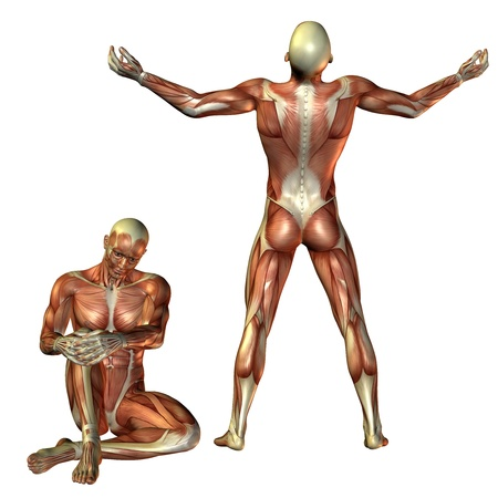 muscle bone: 3D RenderingMuscle man sitting and standing