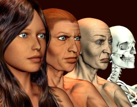scheletro umano: rendering 3D di una giovane donna che � pi� vecchio di illustrazione Archivio Fotografico