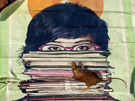 librarian: Illustration of a bookworm, reading rat Stock Photo