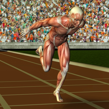 muscle anatomy: 3D rendering of the muscle structure of an athlete at the finish Stock Photo